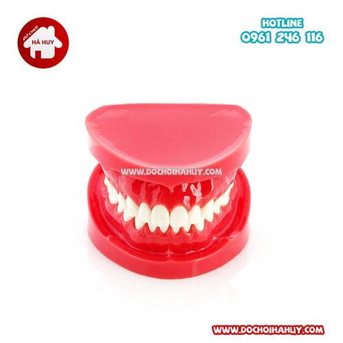 Bộ mô hình hàm răng